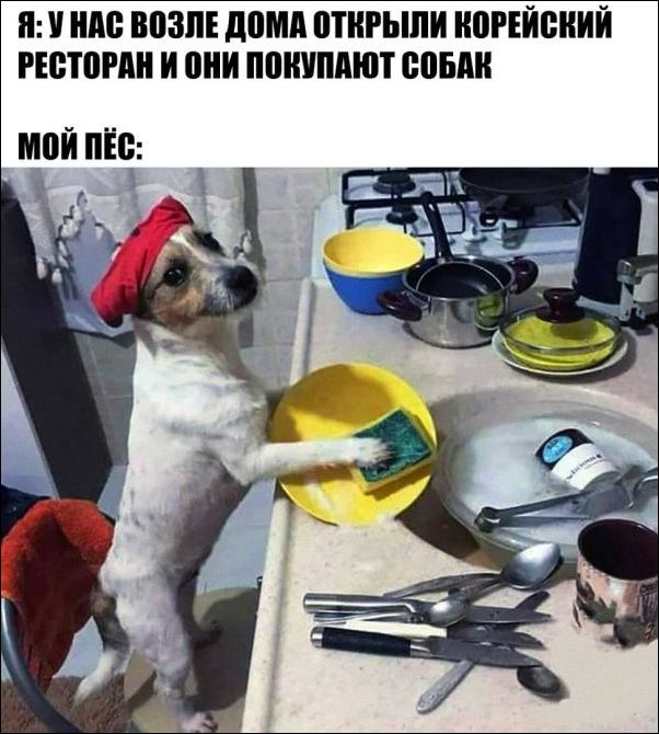 1523644730_fotopodborka-58.jpg
