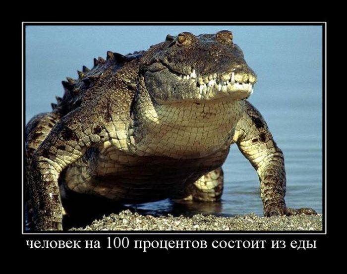 1351610867_demotivatori-prikoli_bygaga.com.ua_3347-31.jpg