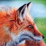 Nicholas Fox